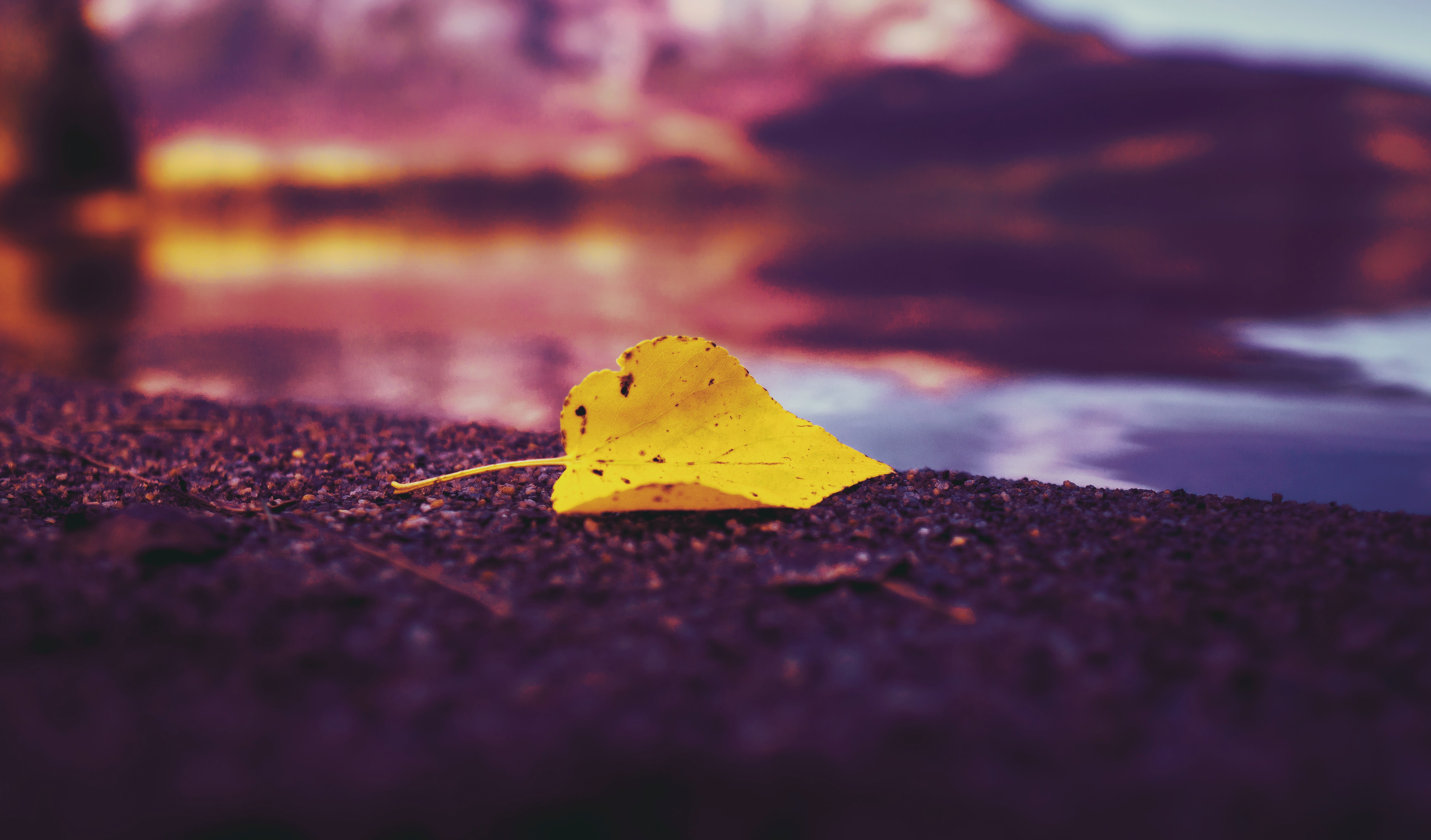 Single Yellow Leaf with lake in background