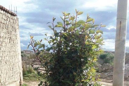 Tree in Altiplano Bolivia
