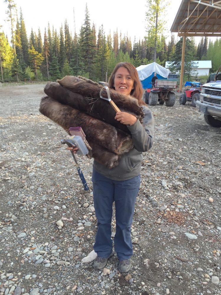 Frieda Huson carries a pile of beaver pelts.