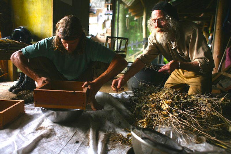 Master Chinese herbalist Joe Hollis with young apprentice in his apothecary at Mountain Gardens, Celo, North Carolina.