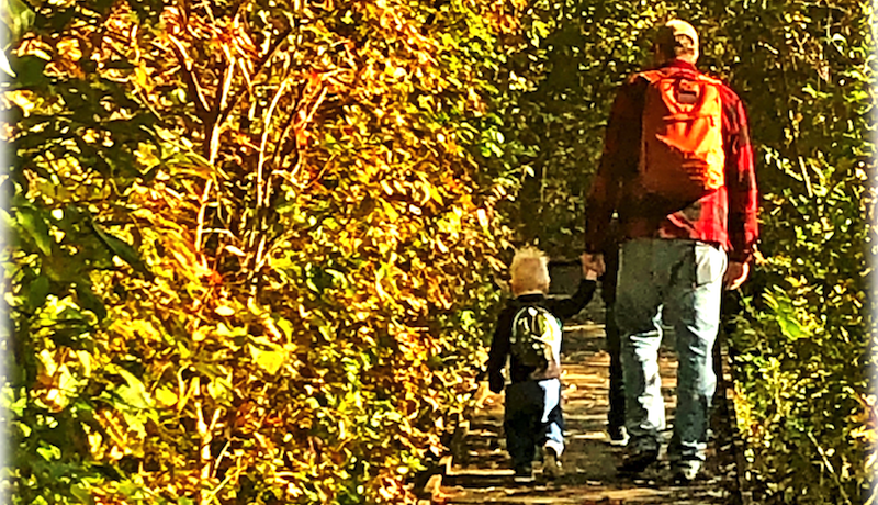 A tall person walks hand in hand with a child in the golden leaves