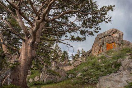 Rocky landscape with tree