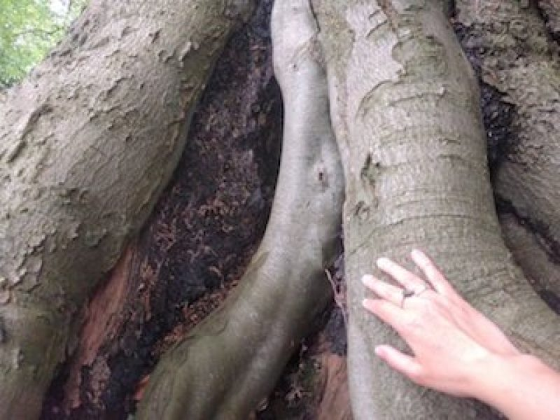 Photo of root with hand