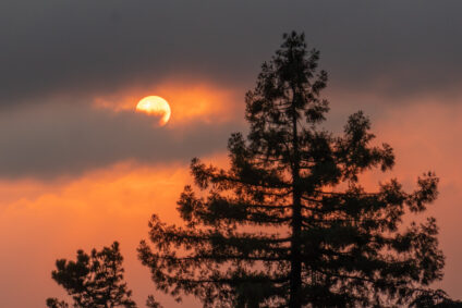 Large profile of tree in foreground with sun in background obscured by clouds and reddish sky