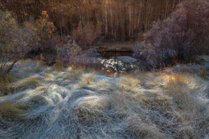 A frosty Sierra morning, about 10,000' elevation. Fall has arrived in the mountains,with its sweet morning light.