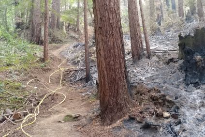 The CZU Lightning Complex fire was stopped here, along the Fawn trail at Ben Lomond Quaker Center. Photo: Bob Fisher.