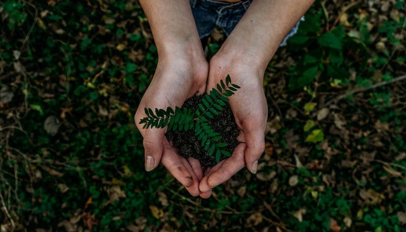 Two hands holding small fern