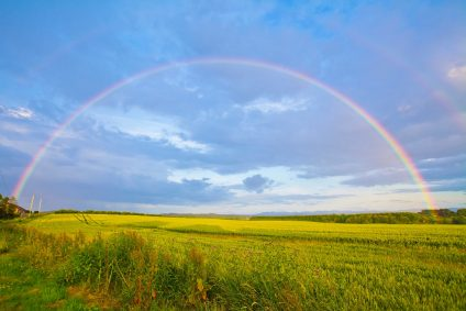 Rainbow in green field with blue sky
