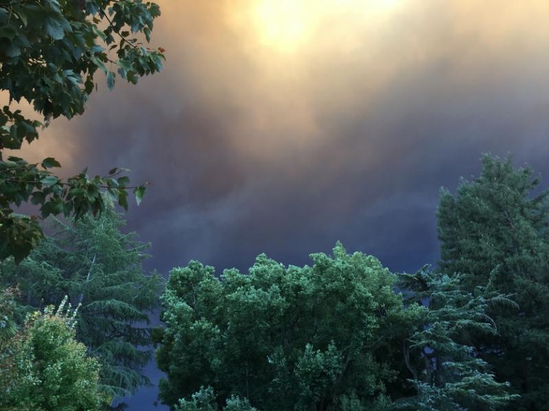 Smoky purple skies behind green trees