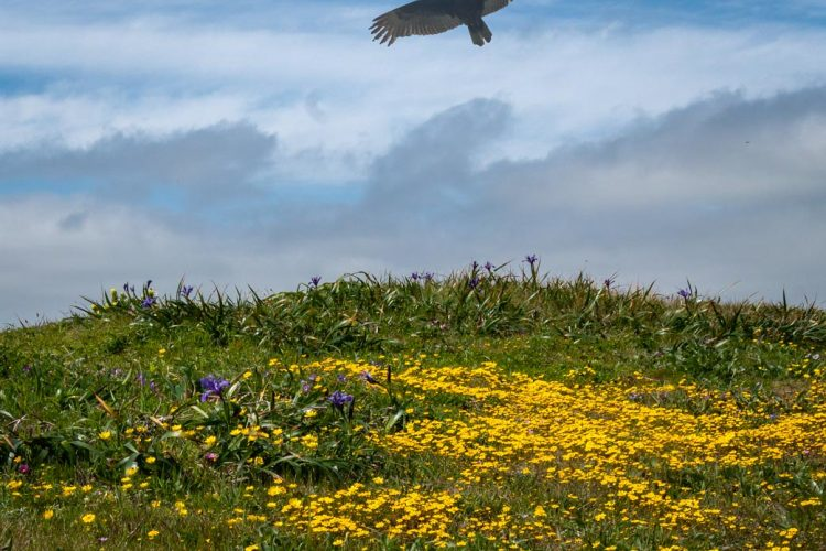 Bird over field