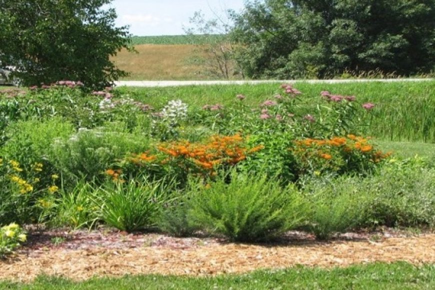 Green pollinator garden
