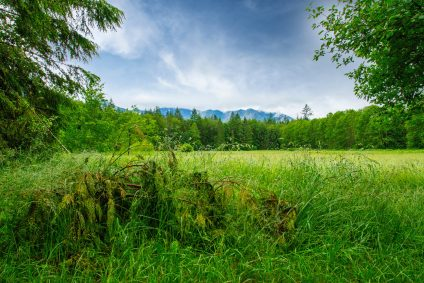 Grassy field with trees and blue sky and mountains in background